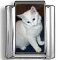White Cat Looking Down Photo Charm